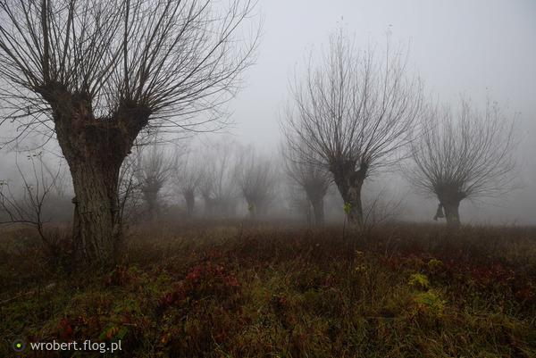 https://s27.flog.pl/media/foto_middle/12944190_wierzby-w-zadumie-w-szumie-.jpg