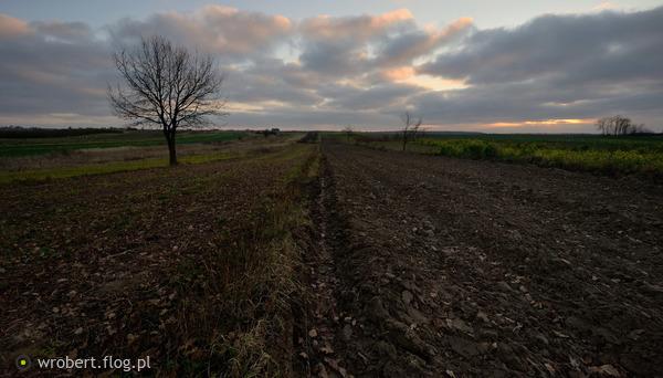 https://s27.flog.pl/media/foto_middle/12947663_do-kraju-tego-gdzie-kruszyne-chleba-podnosza-z-ziemi-przez-uszanowanie.jpg
