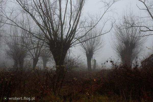 https://s27.flog.pl/media/foto_middle/12951852_wierzby-nie-strzyzone-pochylaja-glowy-.jpg