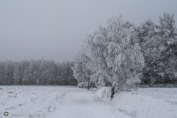 https://s27.flog.pl/media/foto_middle/12959492_zima.jpg