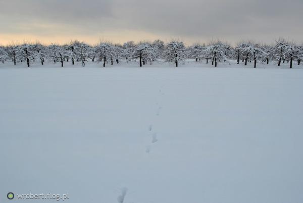 https://s27.flog.pl/media/foto_middle/12962659_tropy--w--sniegu-jak-zwierzece-drogowskazy-powiedza-wszystko-.jpg
