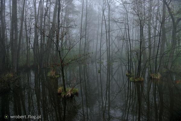 https://s27.flog.pl/media/foto_middle/13073246_okryta-mgla-nim-zaswita--wiosna.jpg